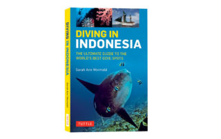 Diving in Indonesia Freediving