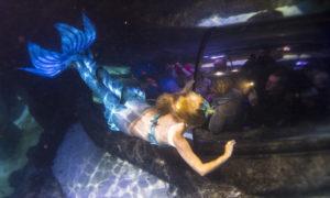 Mermaid sea life