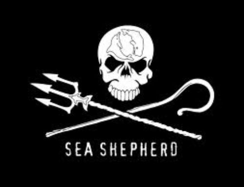 Sea Shepherd Club talk Manchester