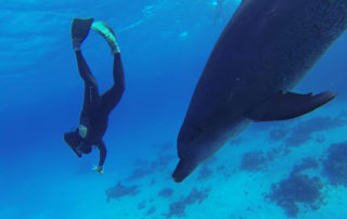 steve millard diving with dolphins