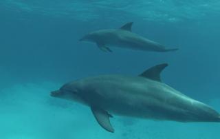Dolphin freediving trip