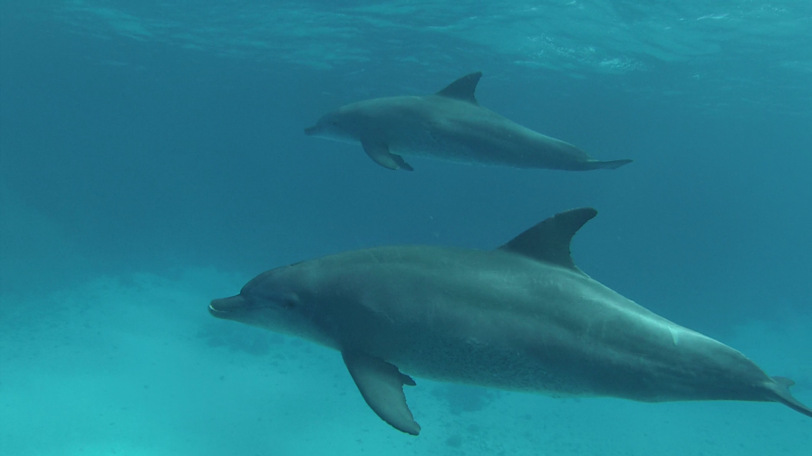 Dolphin freediving trip