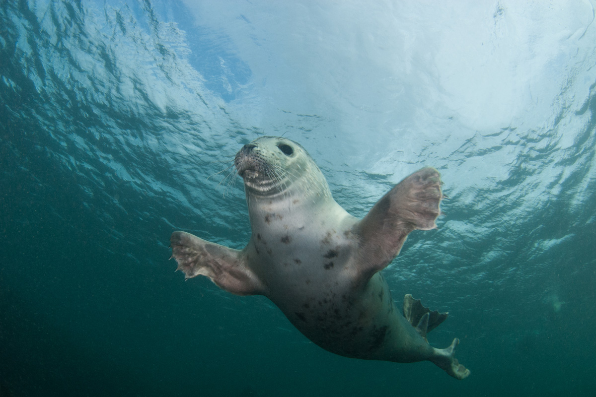 Freediving in the Farne Islands with Seals
