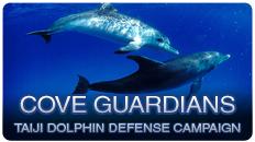 Sea Shepherd Cove Guardians